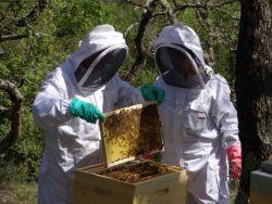 Une de nos  passions pour du bon miel aux petits déjeuners.