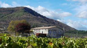 La maison au milieu des vignes