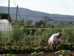 Georges dans son jardin