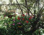 l'été , les fleurs , le soleil