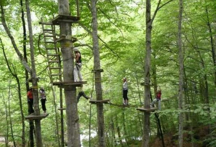 Tree climbing in the Ardeche Gorges